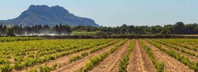 法国葡萄酒 - 普罗旺斯丘-弗雷瑞斯 Côtes de Provence Fréjus