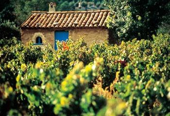 法国葡萄酒 - 普罗旺斯桃红葡萄酒 Vin Rosé de Provence