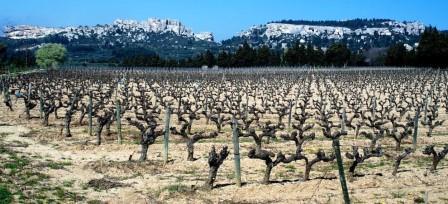 vignes-普罗旺斯地区莱博_Les Baux-de-Provence