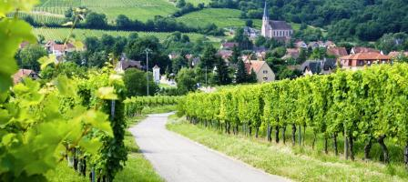 阿尔萨斯葡萄酒之路 Route des vins d'Alsace