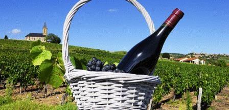 薄酒萊葡萄酒 Les Vins du Beaujolais