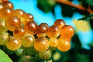 法国葡萄酒 – 干型和甜型葡萄酒的分界点:残留糖分 Vins secs et moelleux
