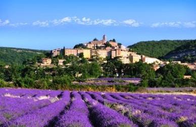 普罗旺斯 La Provence_Lavande