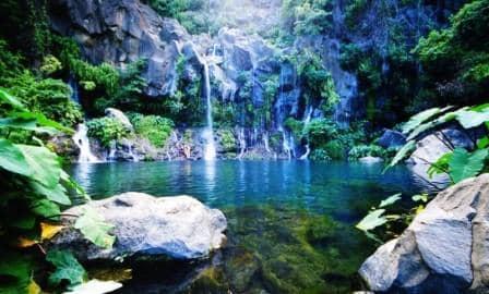 bassin_aigrettes _留尼汪岛_L'île de la Réunion